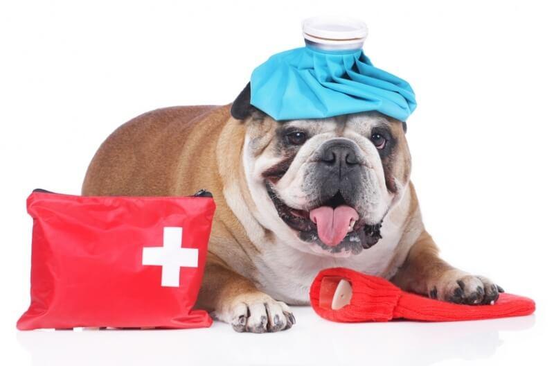 Erste Hilfe Kurs für den Hund